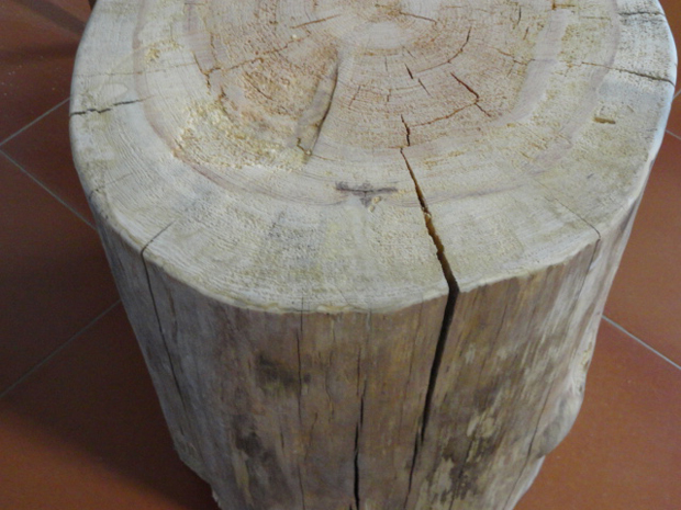 troncos detalle